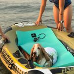 attivita natatorie, bassetthound, canotto