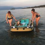 attività in acqua, bassetthound