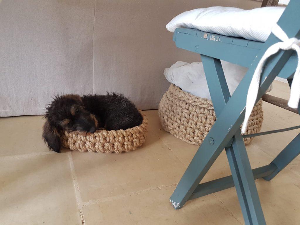 bassotto che dorme, cane che dorme